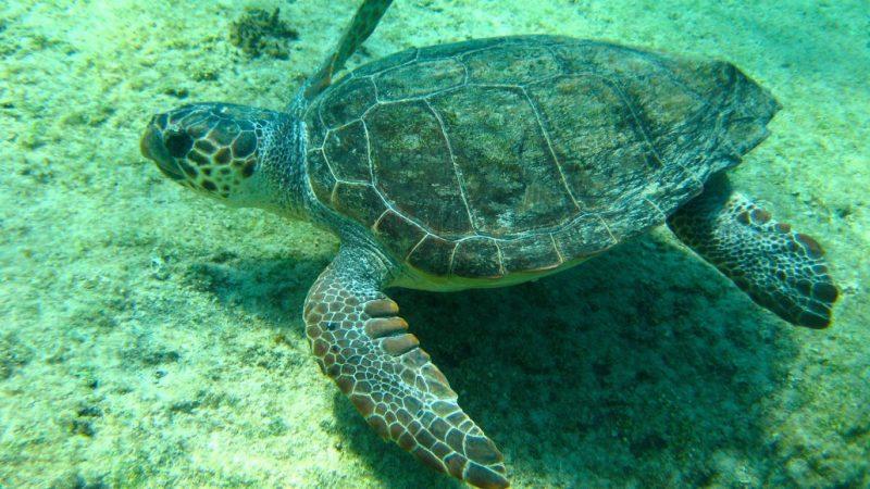sicilia-tartarughe-marine