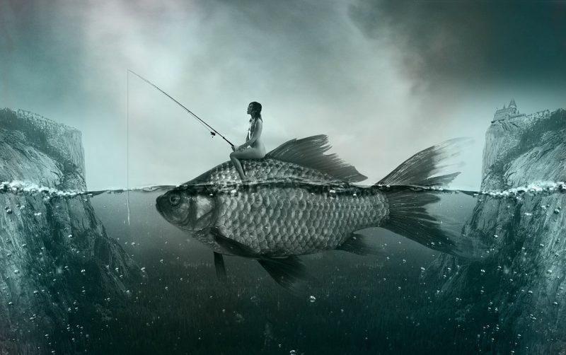 fish-1372923_1280